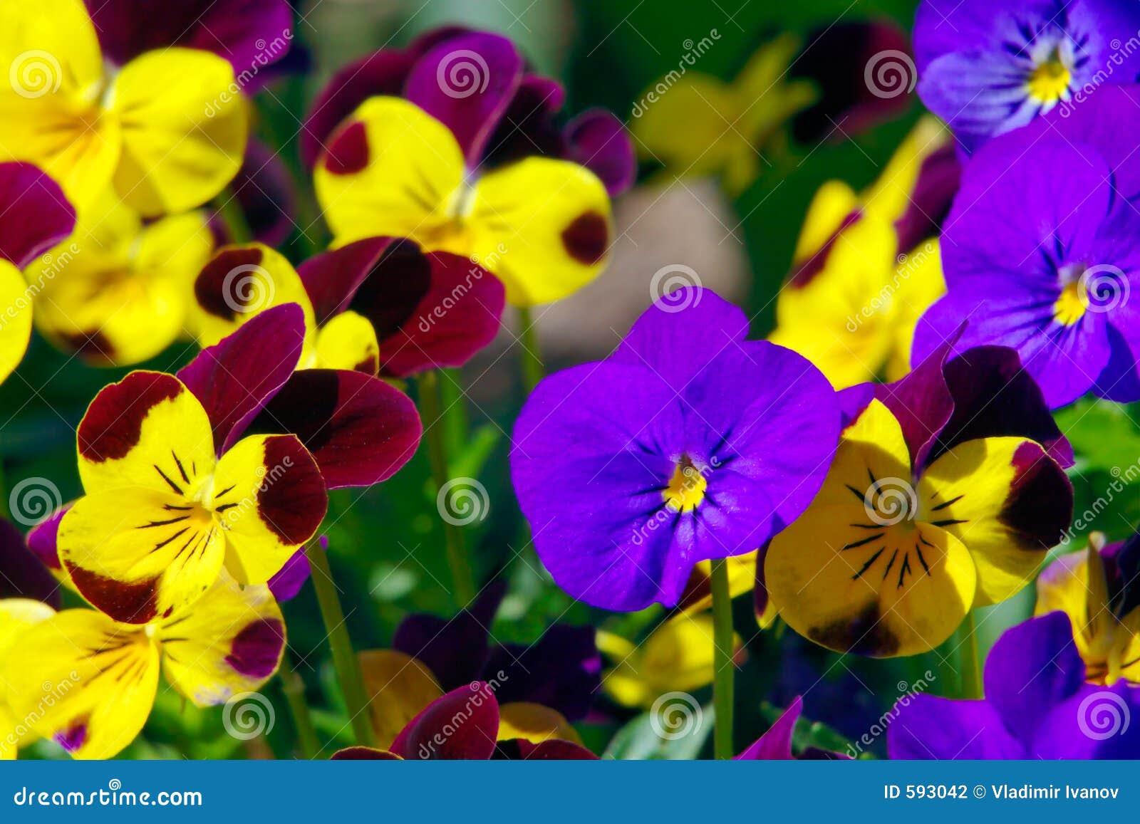 spring flowers 593042