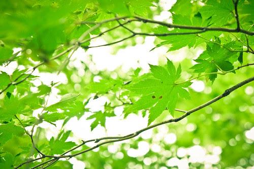 the summer green