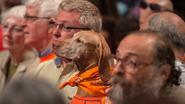 Did he hear a whistle? Topper the dog attends a rally for NDP Leader Tom Mulcair in Toronto earlier in the campaign.