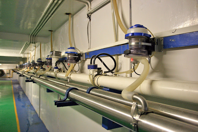 The milk from the cows are measured here and flow to the filtration room, all by gravity (it's a sloping room)