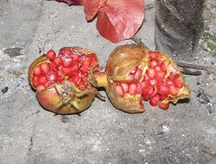 decorative pomegranates