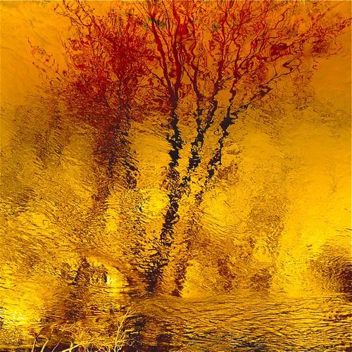 Ode To Joy In My Wild River…!!! por Denis Collette...!!!