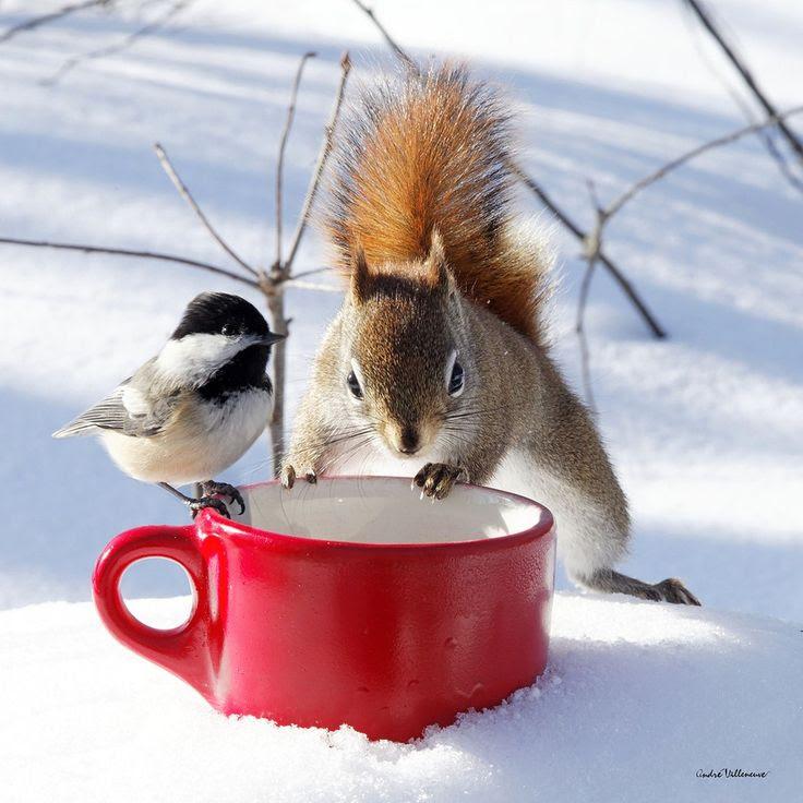 Ωρα για καφεδακι στο χιονι!