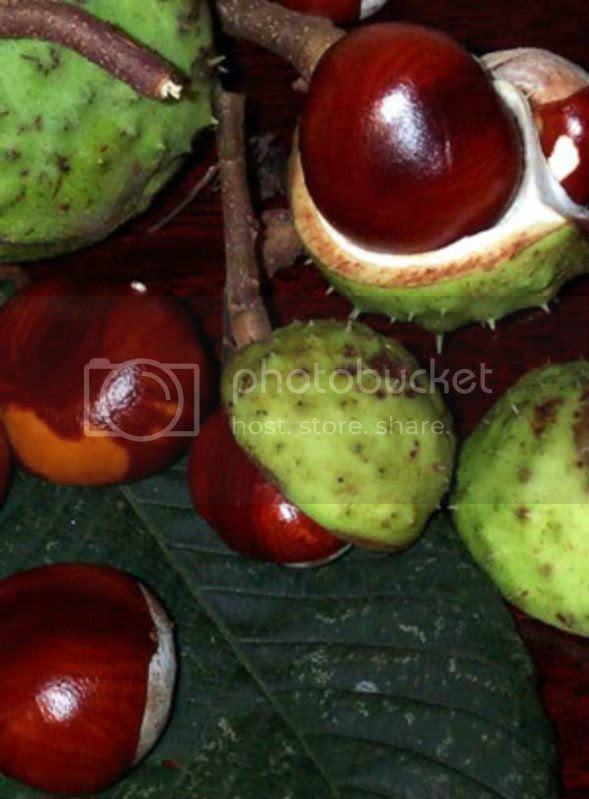 bethany_malcolm-conkers