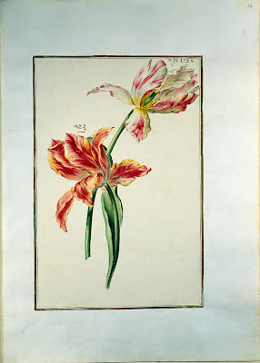 German flower watercolour 1730
