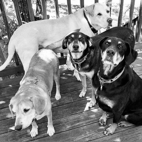 #blackandwhite #dogstagram