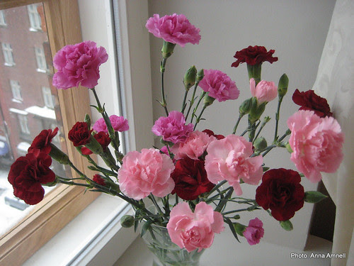 carnations by Anna Amnell