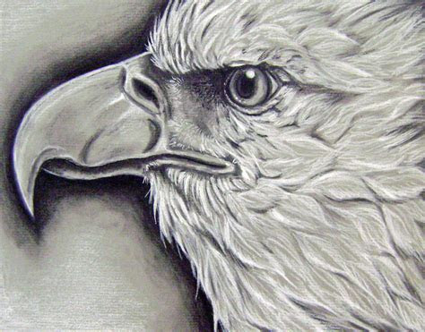 animal charcoal drawings ms turnbulls student art gallery