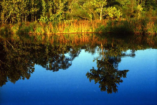 Beaver Pond Color