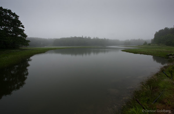 quiet, misty, reflections, Rachel Carson National Wildlife Refuge