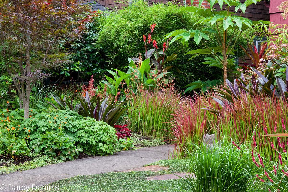 Case Study Perennial Garden With Japanese Maple Creative