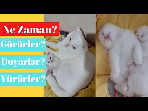 Yavru Kedi Bakımı NASIL YAPILIR?