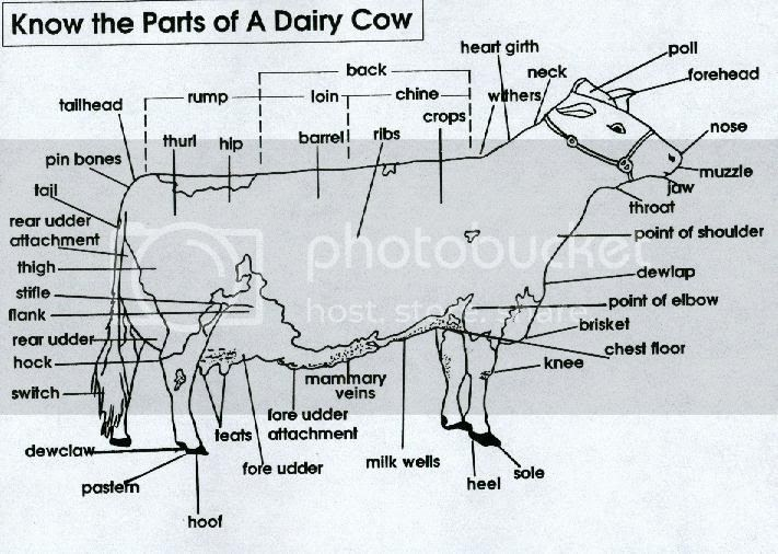 parts of a dairy cow diagram all about repair and wiring collections parts of a dairy cow diagram parts of a dairy cow diagram parts of a