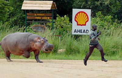 Hippo chase man