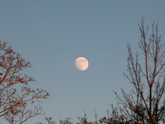 Moonrise at Central Park's Great Hill