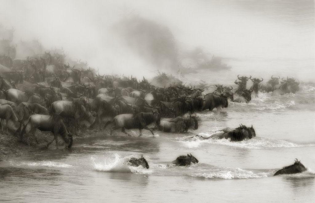 O lado colorido da África selvagem por Alex Bernasconi 07