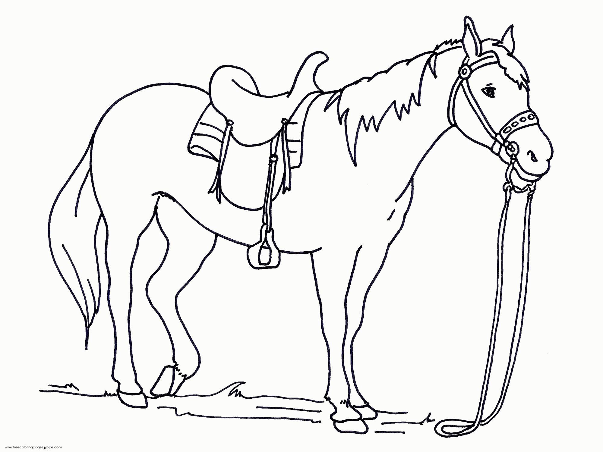 Arabian Horse Coloring Pages at GetColorings.com | Free ...