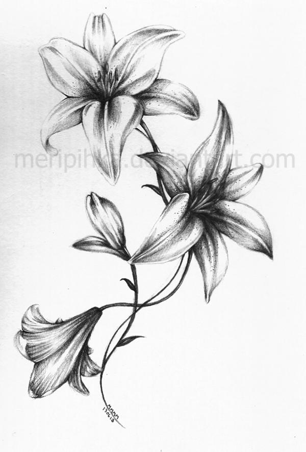Lilies Tattoos Designs