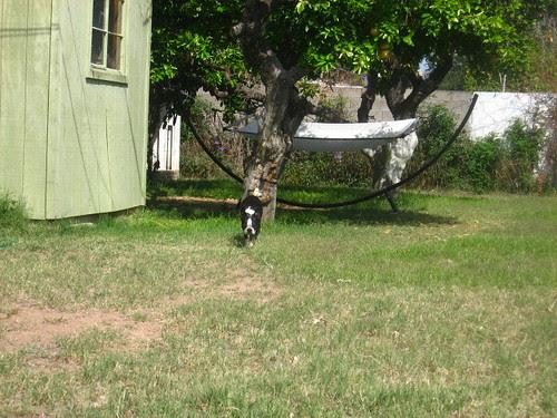 joey enjoying the weather