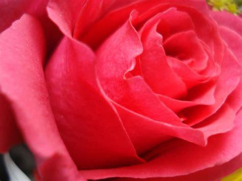 desktop inspiratoin beautiful rose flower wallpaper
