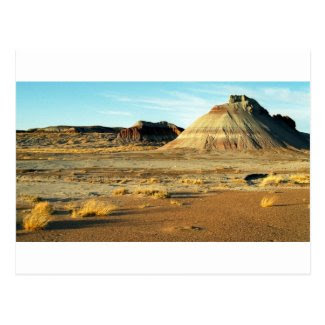 Petrified Forest Desert Postcards