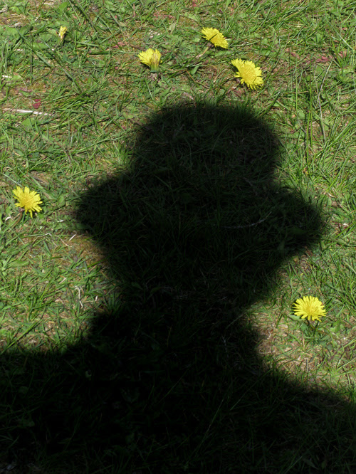 dandelions and my shadow, Kasaan, Alaska