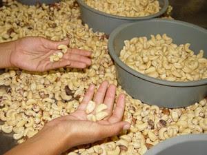 Agricultores de Apodi aproveitam potencial da produção orgânica (Foto: Divulgação/Fundação Banco do Brasil)