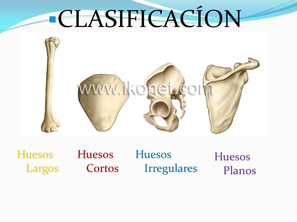 CLASIFICAC%C3%8DON+Huesos+Largos+Huesos+Cortos+Huesos+Irregulares