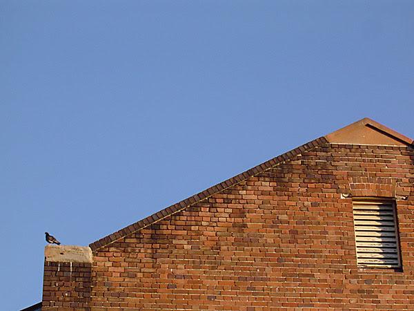 roofline. with pigeon.