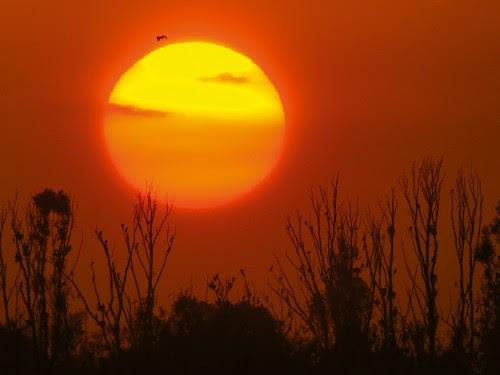sunset13 500x375 The Beauty of Sunset