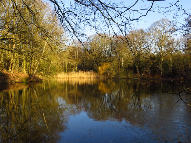 The Stock Pond