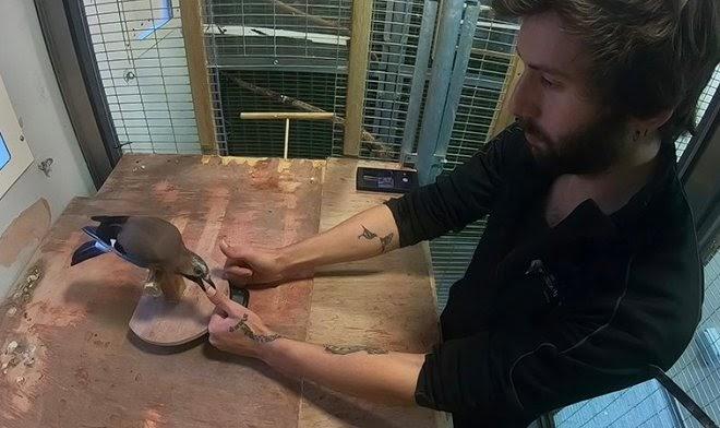 Профессиональные иллюзионисты показали птицам свои лучшие фокусы — но не смогли их обмануть
