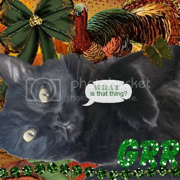 House Panther,Domestic Cat,Talking Turkey,Grr