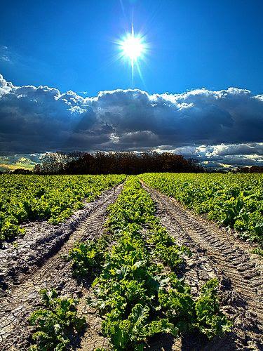 Farmer's Way