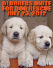 Bloggers Unite for Dog Rescue