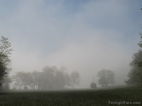 (27-17) Hayfield view from the house, our morning mist is back - FarmgirlFare.com
