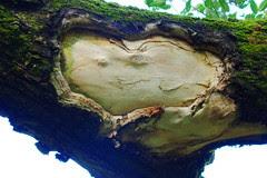 Heart Happy Face Tree