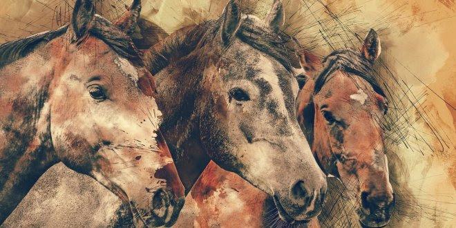 Die Schönsten Pferdesprüche Equino De