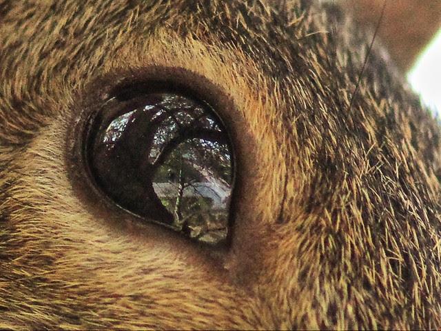 My reflection in squirrel eye 20131215