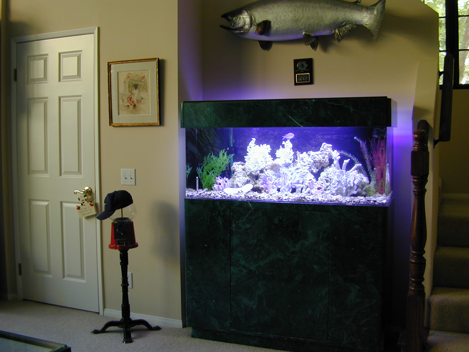 60 Gallon Marine Fish Tank, Aquarium Design, Marine Aquariums and ...