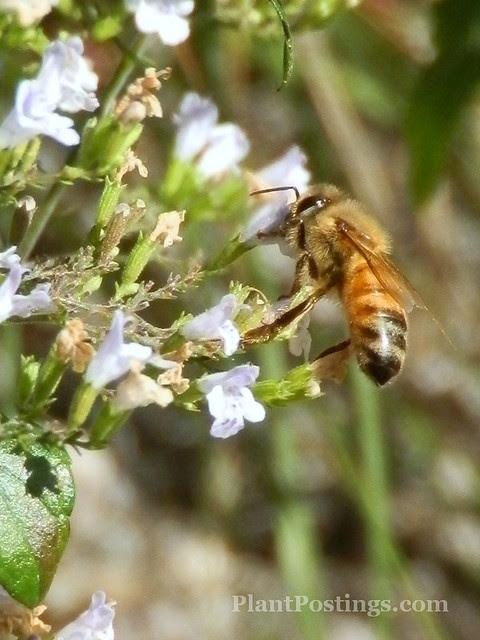 pollinators3