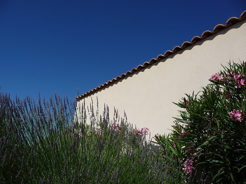 Lavender and Blue Skies