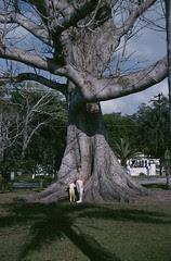 momcarolkapoktree