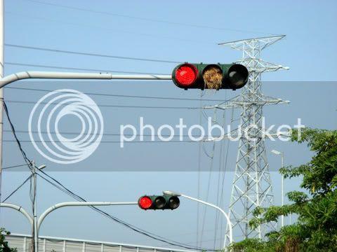 紅綠鳥巢燈