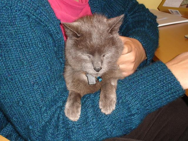 Henrycat cuddles 002