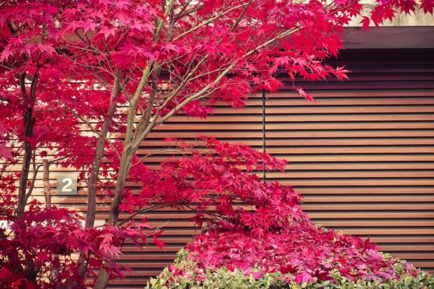 5 Best Foundation Plants For Commercial Landscaping (As Told By Landscaping Experts)