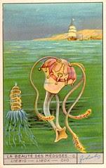 meduse 4