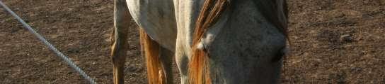 Dejan morir de hambre a más de 300 caballos para no pagar su alimentación  (Imagen: ADE)