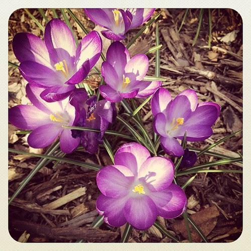 It's springing.
