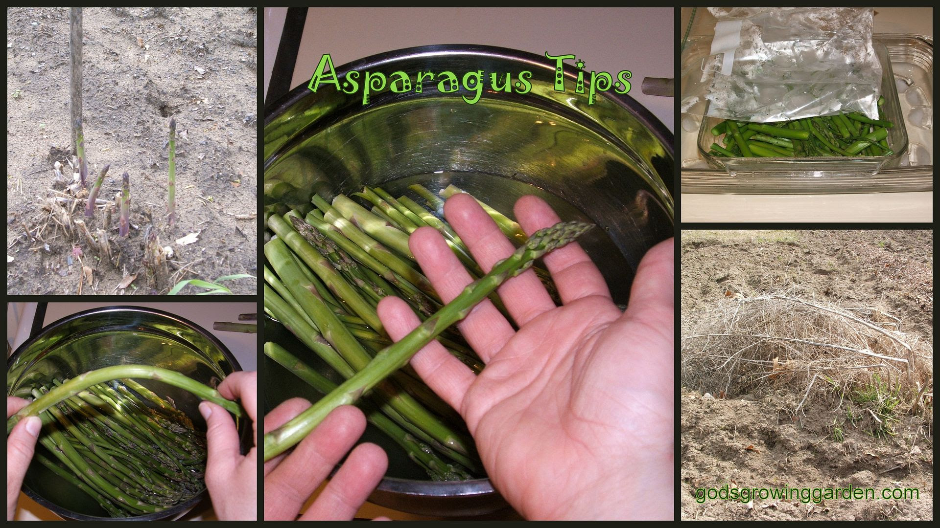 Asparagus by Angie Ouellette-Tower for godsgrowinggarden.com photo BlogStuff_zps619fb8bc.jpg